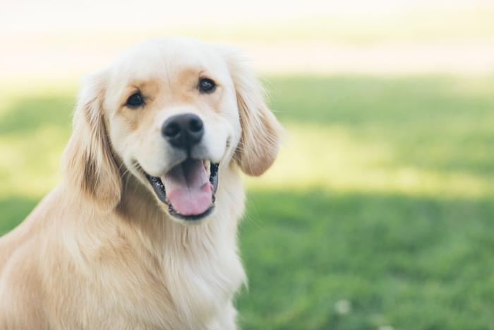 犬が「噛む」という行為は愛情があってのこと!
